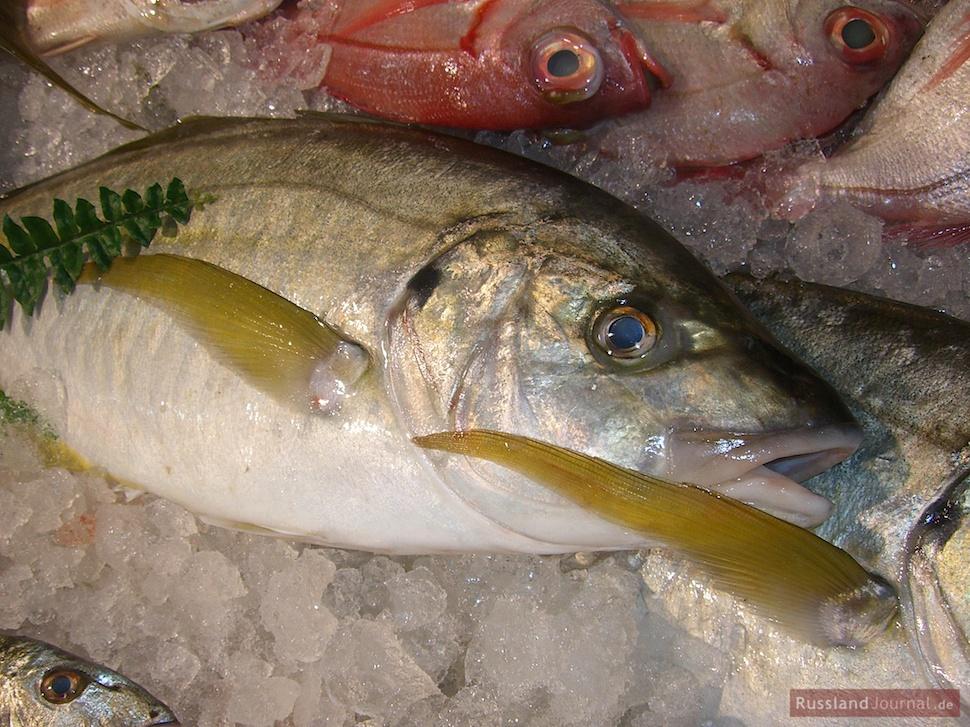 Fisch mit klaren Augen für Ucha