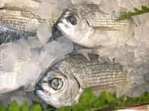 Frischer Fisch für Ucha
