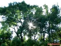 Sonne scheint durch grüne Bäume