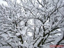 Baum voll Schnee