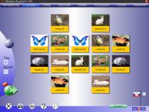 Memory-Spiel bei Strokes Easy Learning Russisch