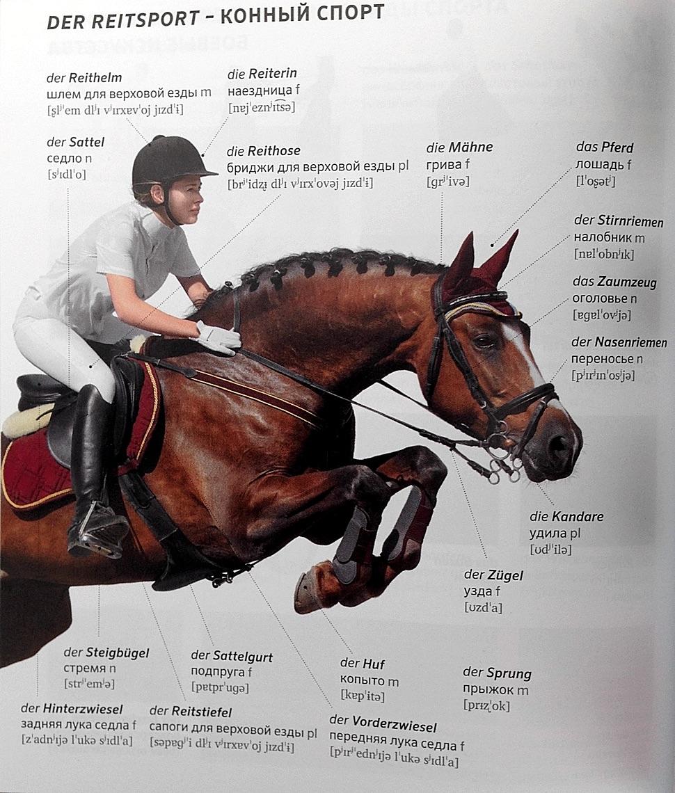 PONS Bildwörterbuch Russisch Deutsch Reitsport