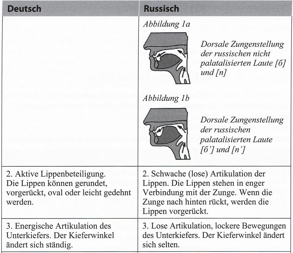 Abblildung der Sprechorgane bei der Artikulation der russischen Laute b und p, Lippenbeteiligung, Unterkiefer