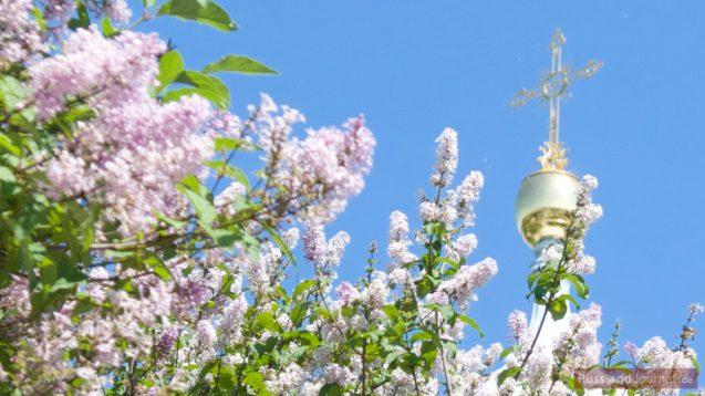 Flieder in Blüte beim Smolny Kloster in St. Petersburg